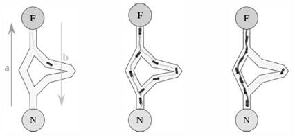 کد الگوریتم مورچه