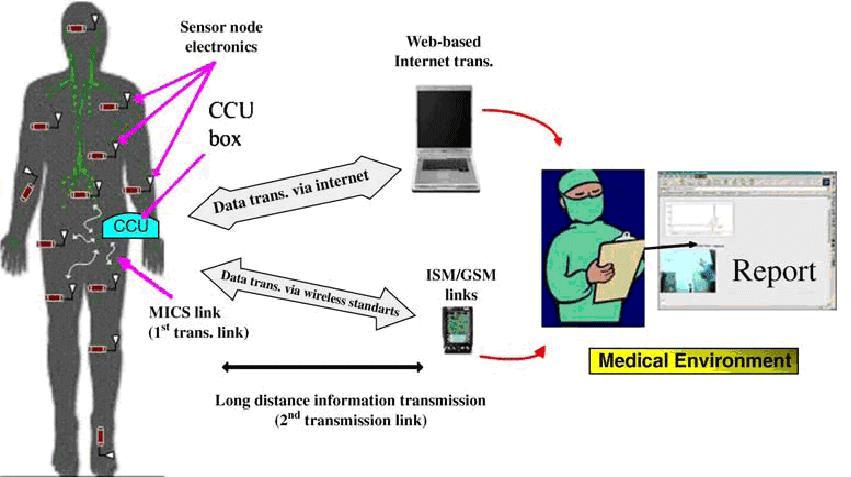 مسیریابی شبکههای حسگر بیسیم بدنی